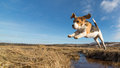 dog-jumping-over-pool-water-29720697